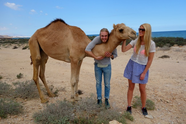 Friendly camel in the desert