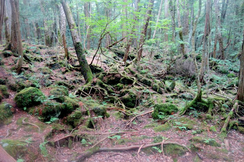 Our Journey to Suicide Forest, Aokigahara, Japan