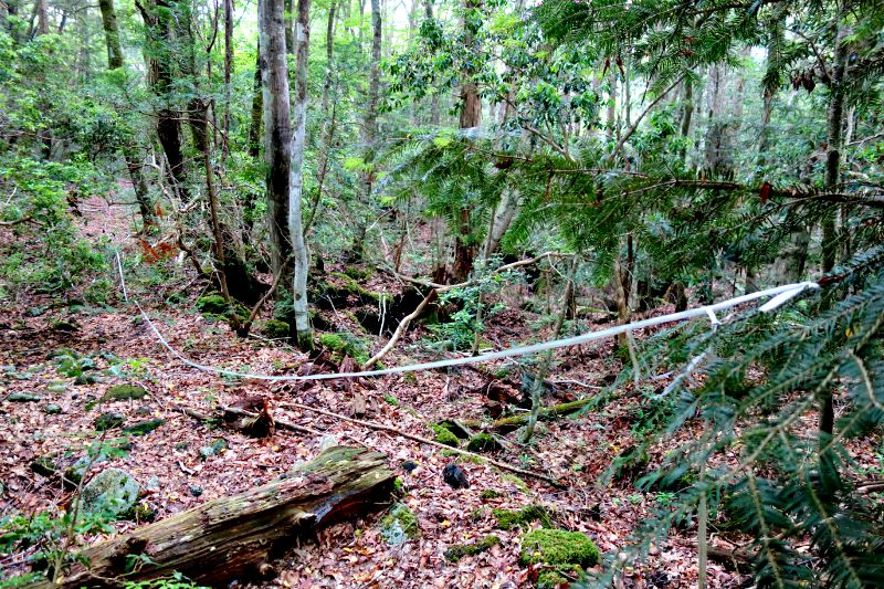 Our Journey to Suicide Forest – Aokigahara7