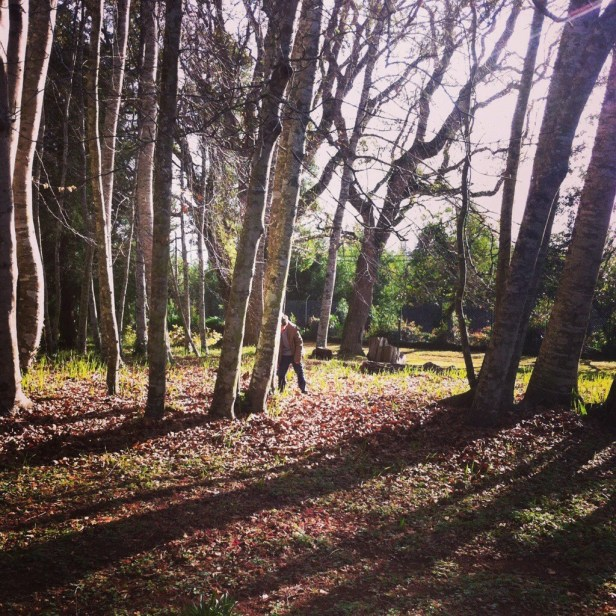 Escondidos na Quinta do Santo da Serra