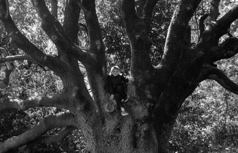 Daniel in the Climbing Tree