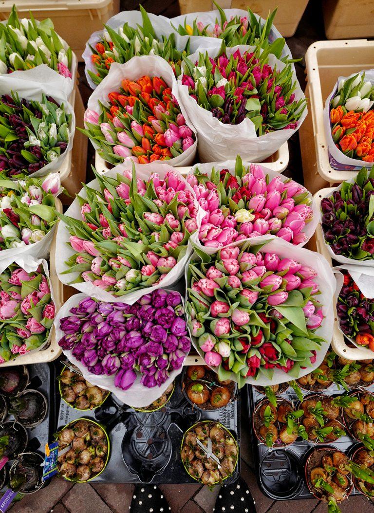 Flower market Bloemenmarkt Amsterdam