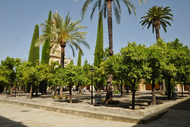 Courtyard of the orange trees of the Mosque Cordoba Cathedral