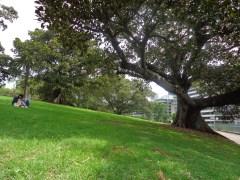Gros arbre