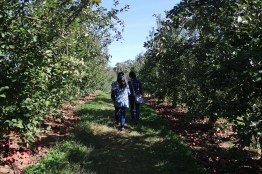 Walking around Linvilla Orchard