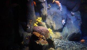 The Lisbon Oceanarium – Wonder, Beauty and Awe.