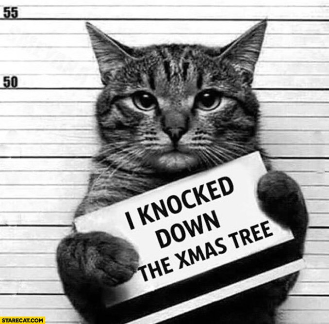 cat-guilty-i-knocked-down-the-xmas-tree-prison-jail-arrest