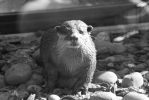 <h5>Wildlife Photography</h5>