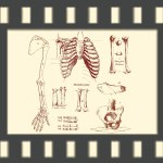 Bones - Orpheus and Eurydice - an animation directed by Saranne Bensusan