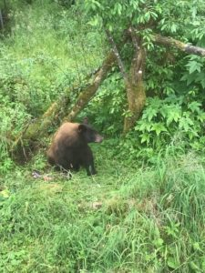 Look Ma! A bear! No zoom :)
