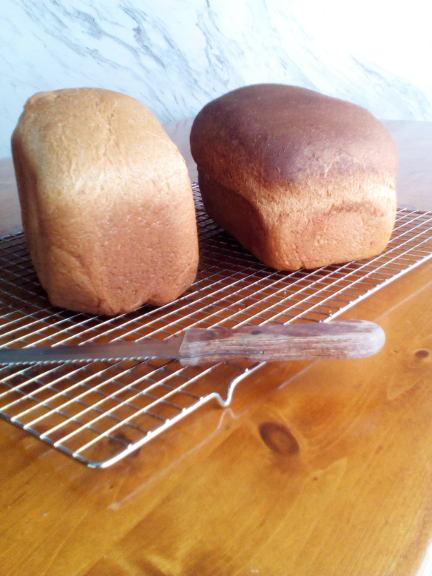 spelt-whole wheat bread machine recipe