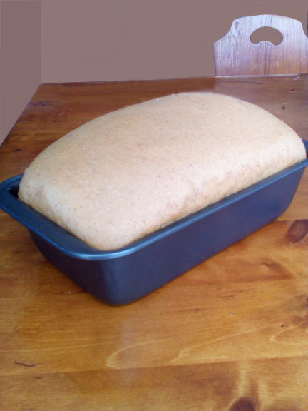 spelt-whole-wheat-bread-raising-in-the-loaf-pan