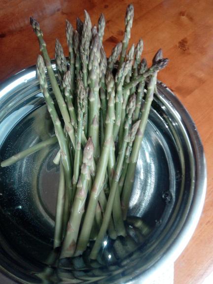 Asparagus cut fresh from the garden