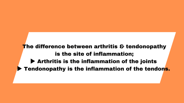 difference between joints and tendins