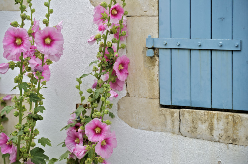 5 holiday lets in Ile de Ré still available this summer  - holiday challenge #2 (1/6)