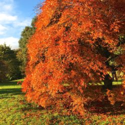 Autumn colours, tree, hotel endsleigh, devon VIA From the Poolside blog on boutique hotels and stylish rentals for family holidays