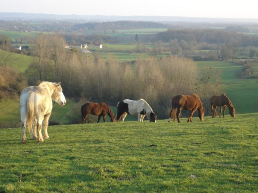 Le Perche region in Normandy, horses in a green field