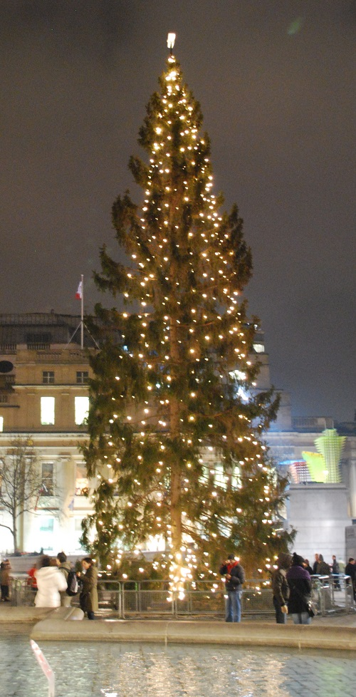 Trafalgar Square Christmas tree8 - Trafalgar Square Christmas tree, a gift from Norway
