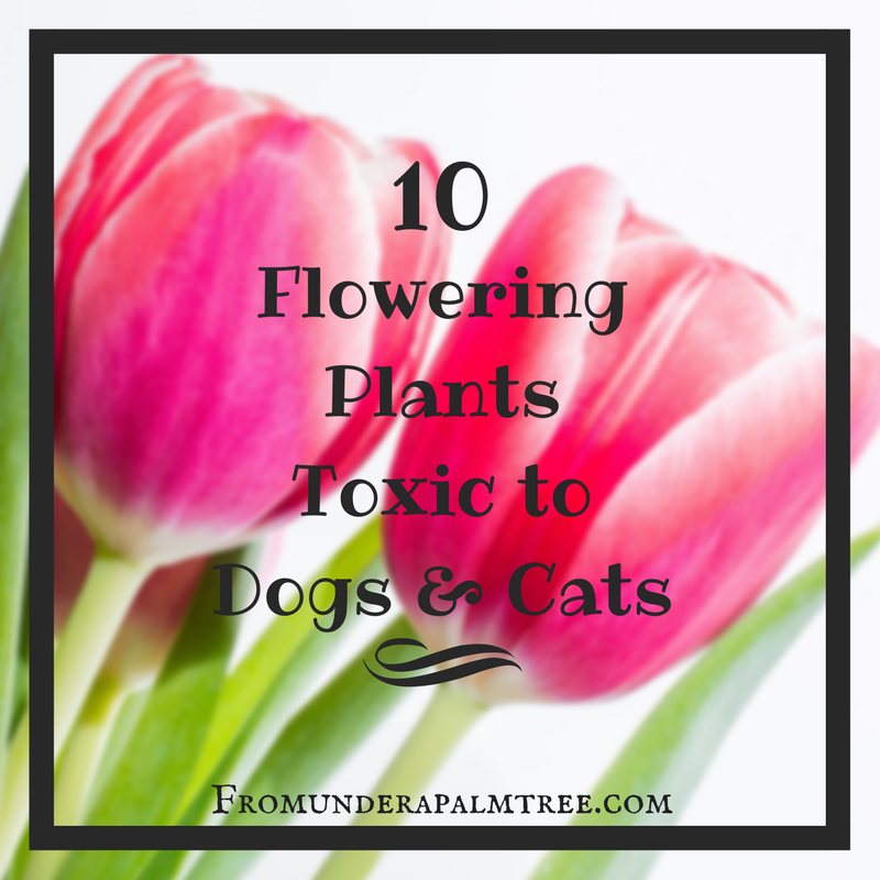 10 Flowering Plants Toxic to Dogs & Cats