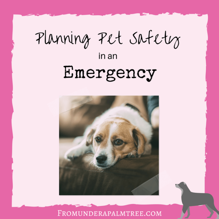 Are you trying to plan ahead for an Emergency? Don't forget your furry friends. Here are a list of items to prepare for pet safety in an emergency. | Pet Emergency Preparedness | Pet Safety in an Emergency | Planning Pet Safefty | Pet safety in a natural disaster | pet hurricane plan | natural disaster plan for your pets | pet owner emergency plan | dog emergency plan | Planning pet safety in an Emergency | Pet Evacuation plan |