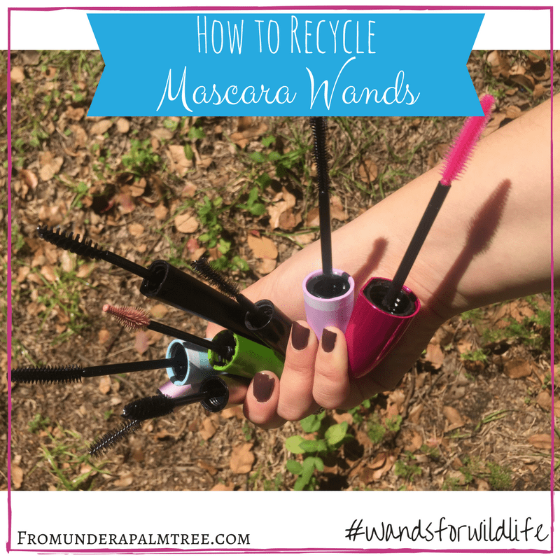 How to Recycle Mascara Wands | Wands for Wildlife | Recycle | Appalachian Wildlife Refuge | protect and save wildlife | help animals | nonprofit organization | wildlife organization | animal rescue | sustainability | green living | sustainable living |