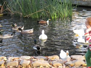 Kid with Ducks