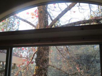 Tree thru window 2