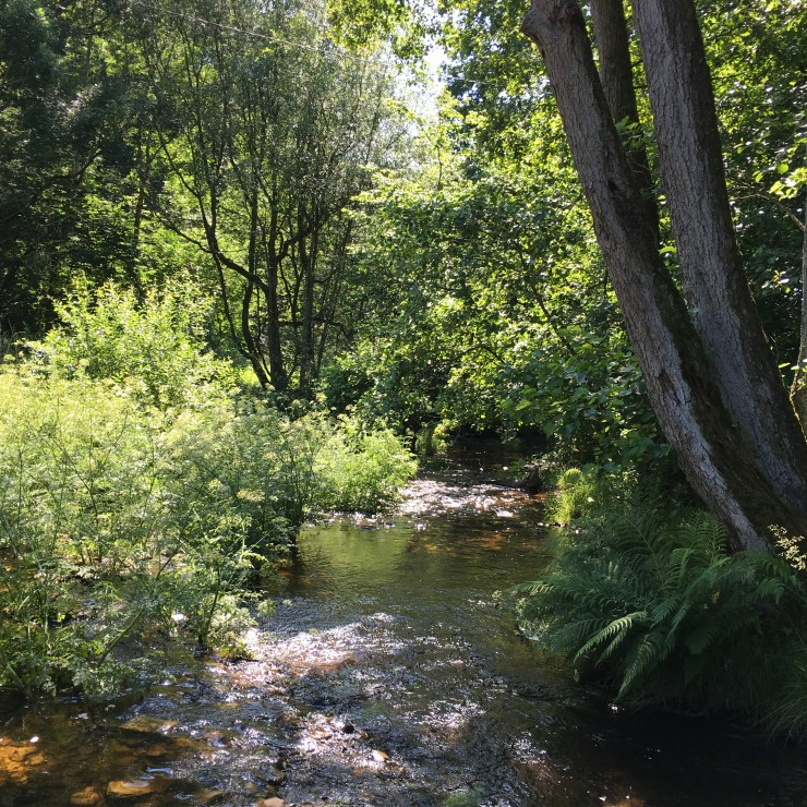 fron-cottage-stream-summer