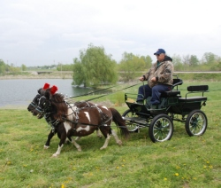 Frontier Equestrian Mini Pony Wagonette Carriage
