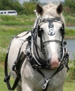 US Made Draft Horse Diamond Spot Show Harness 2
