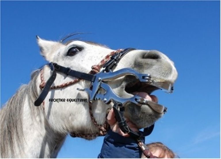 Miniature Horse Dental Speculum Frontier Equestriandraft Horse
