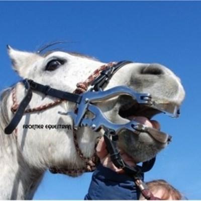 mini horse speculum
