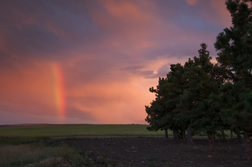 Pine trees and rainbow at dusk in Montana