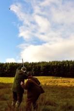 Scotland Driven Shoot