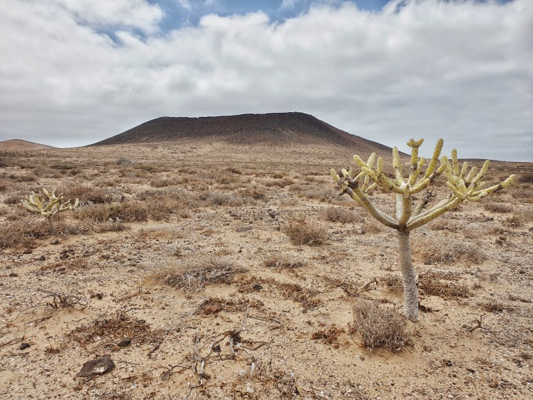 deserto isole canarie