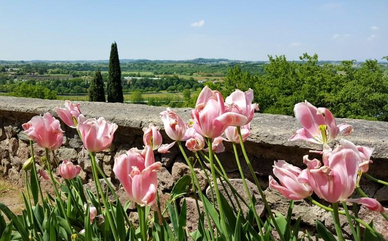 tulipani parco sigurtà