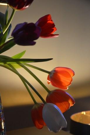 Shadowed tulips