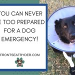 Do You Have a First Aid Kit for Your Dog?