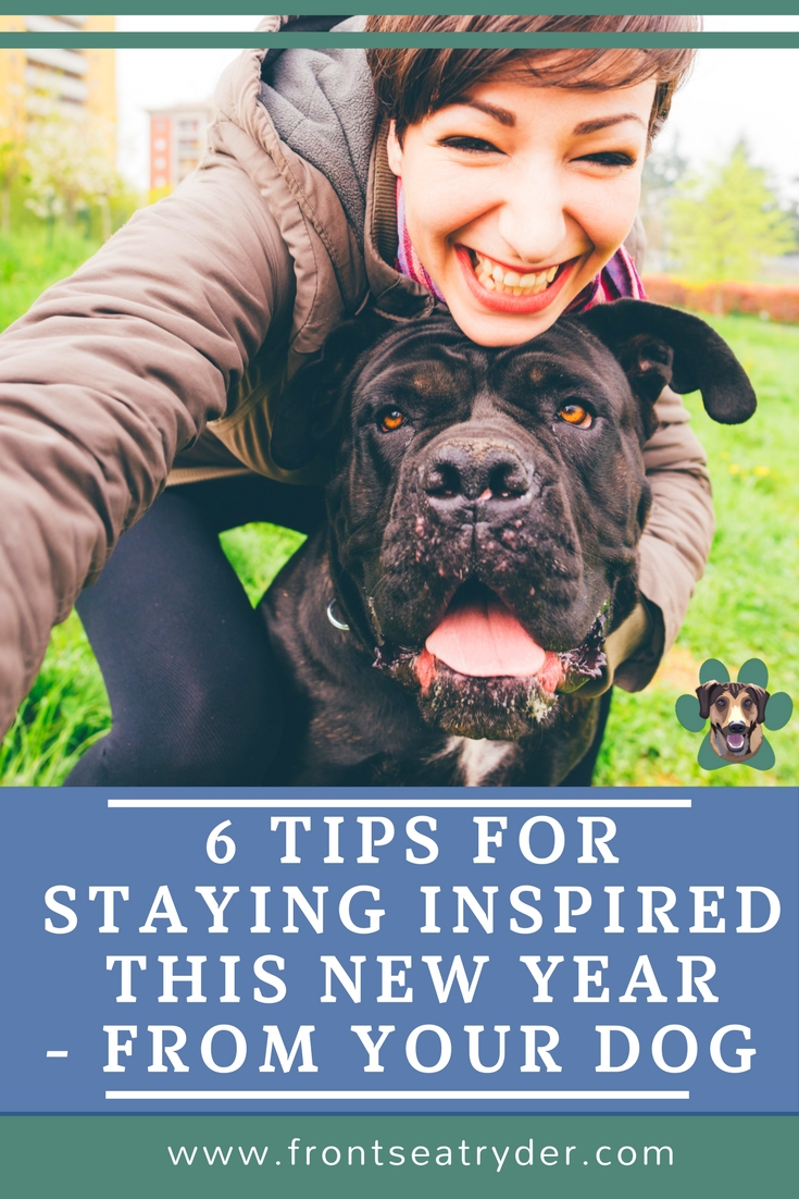 Do you start the year off on top of things? But by the time a few weeks roll by, are you exhausted again? Me too! There is a better way. Here are 6 tips for staying inspired this year straight from the dog's snout!