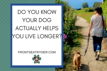 Do You Know Your Dog Actually Helps You Live Longer?