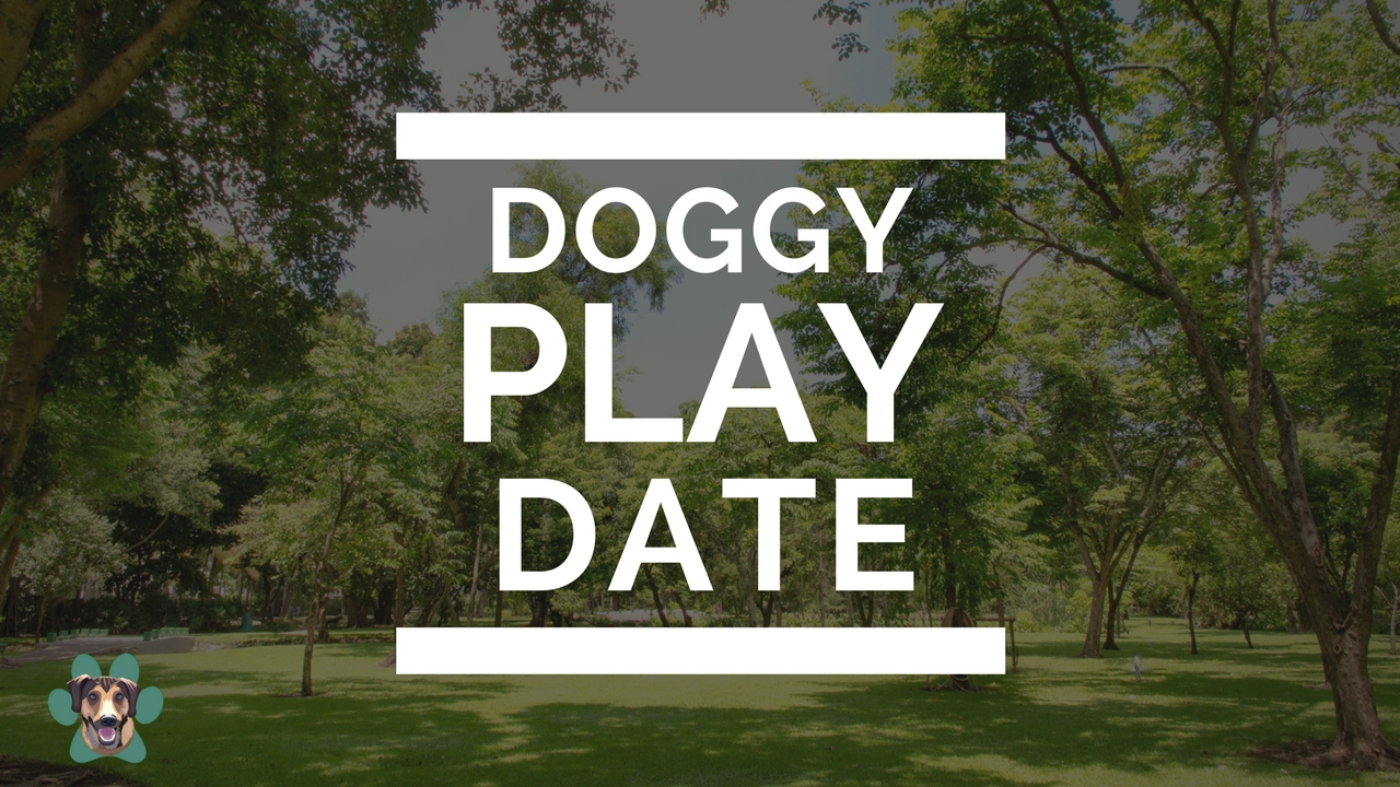 Doggy Play Date