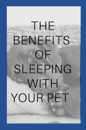 Does your dog sleep with you? Sleeping with your pets can be a controversial topic. But there are some real benefits to having your pooch tucked in with you at night. Real Sleep wanted to sponsor a guest post about the benefits of sleeping with your dog and why you should sleep with your pets.