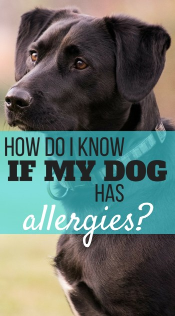 Spring is coming, a time when people's allergies flare due to grasses and flowers in bloom. People can also be allergic to food, such as peanuts, mushrooms, and shellfish. Did you know pets can have allergies, too? And, not only to food, but to things in the environment? How to know if your dog has allergies.