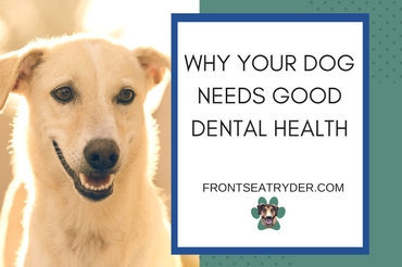 Why Your Dog Needs Good Dental Health