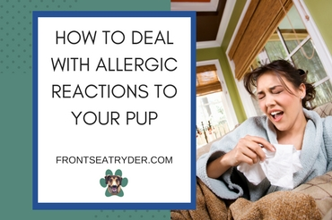 3 Steps to Reducing Allergies for People Who Love Their Pets