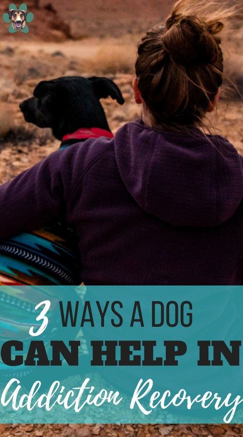 We all have struggles in life. Some have bigger things to deal with than others. One of the hardest things to go alone is addiction recovery. Having a pet could be just the thing you need to help you through this challenging and stressful time. Let's look at the top three ways a dog can help in addiction recovery.