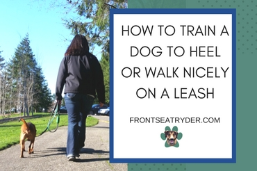 How to Train a Dog to Heel or Walk Nicely on a Leash