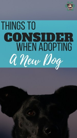 Are you looking for a dog? For every person that is looking to get a dog, there will be a different reason behind it. Despite all of the other reason, it would be safe to say that companionship is going to be up there. But let's take a look at a few things you should think about before adopting your four-legged friend.