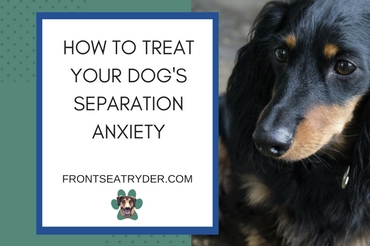How to Treat Your Dog's Separation Anxiety