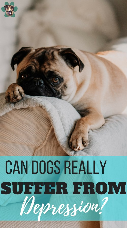 As dog owners, we often think about the physical well-being of our buddies. However, do you think about our dog's mental health as well? Like any other animal, a dog can get unhappy and even suffer from depression. Let's look at why your dog might be depressed and what you can do to fix the issue.